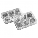 152035 cell tissue culture multiwell dish 6 well 9.6cm2 3ml 128mm x 86mm Multidish sterile disposable polystyrene PS Poly-D-Lysine coated with lid (pack of 20)